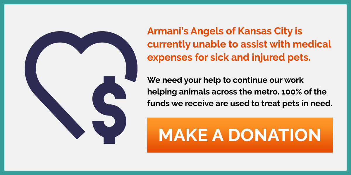 Donate to Armani's Angels